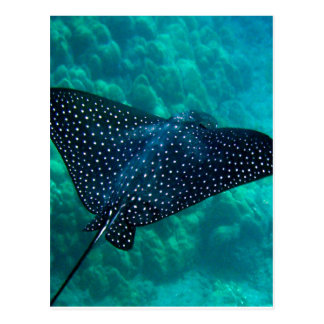 Hawaii Spotted Eagle Ray Postcard