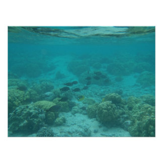 Hawaii tropical fish underwater scenic canvas poster