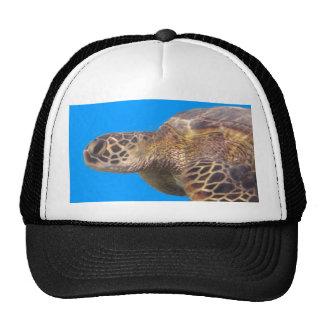 Hawaii Turtle Cap