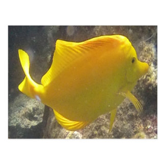 Hawaii Yellow Tang Fish Postcard