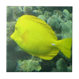 Hawaii Yellow Tang - Lau'i Pala Ceramic Tile