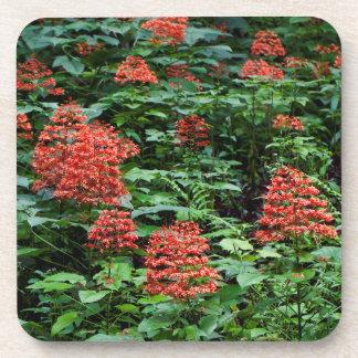 Hawaiian Arboretum Flowers Hard Plastic Coasters