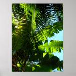 Hawaiian Banana and Coconut Trees Print