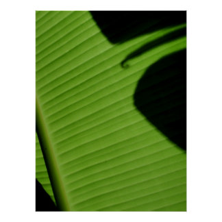 Hawaiian Banana Leaf Poster