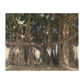 Hawaiian Banyan Tree Wood Poster