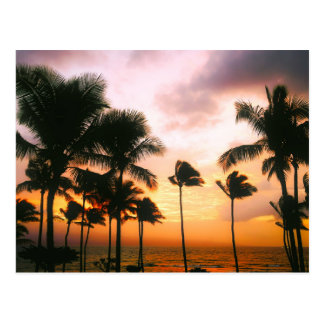 Hawaiian Beach Palm Trees Sunset - Hawaii Travel Postcard