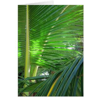 Hawaiian Coconut Palm Card