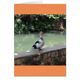 Hawaiian Duck Blank Note Card