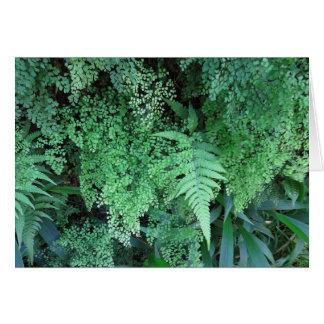 Hawaiian Ferns Card