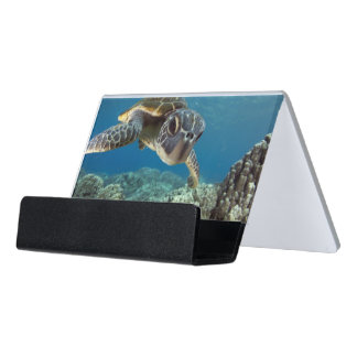 Hawaiian Green Sea Turtle Desk Business Card Holder