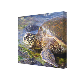 Hawaiian Green Sea Turtle (Honu) Canvas Print