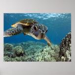 Hawaiian Green Sea Turtle Posters