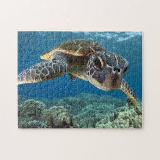 Hawaiian Green Sea Turtle Puzzles