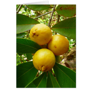 Hawaiian Guava Card