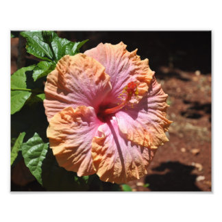 Hawaiian Hibiscus Photo Print