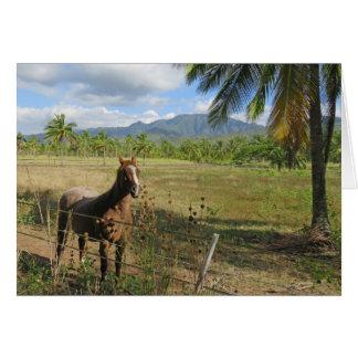Hawaiian Horse Card