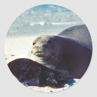 Hawaiian Monk Seal and Pup Round Sticker