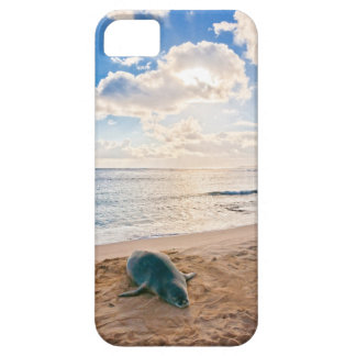 Hawaiian Monk Seal Barely There iPhone 5 Case