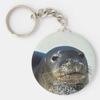 Hawaiian Monk Seal Basic Round Button Key Ring