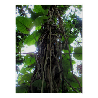 Hawaiian Philodendron Vines Poster
