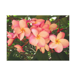 Hawaiian Plumeria Canvas Print