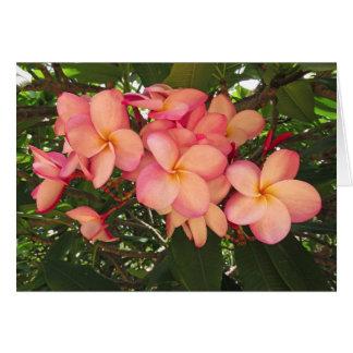 Hawaiian Plumeria Card
