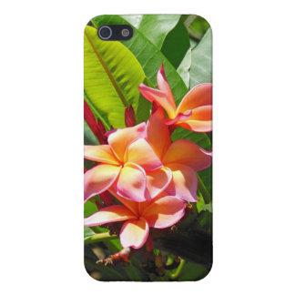Hawaiian  Plumeria iPhone 5 Covers