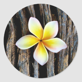 Hawaiian Plumeria Wedding Invitation Stickers