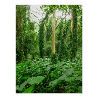 Hawaiian Rain Forest Poster