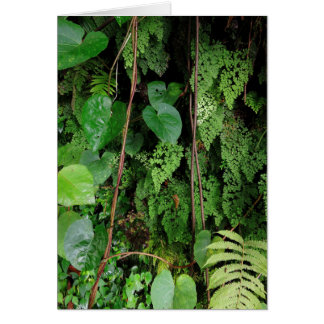 Hawaiian Rainforest Card
