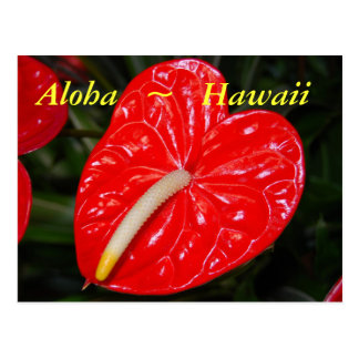 Hawaiian Red Anthurium Flowers Postcard