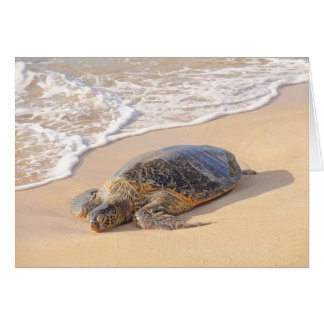 Hawaiian Sea Turtle Card