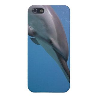 Hawaiian Spinner Dolphin Case For iPhone 5