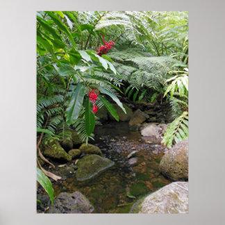 Hawaiian Tropical Stream Poster