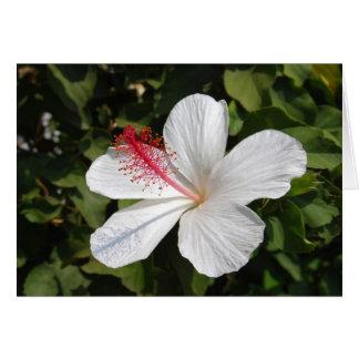 Hawaiian White Hibiscus Card