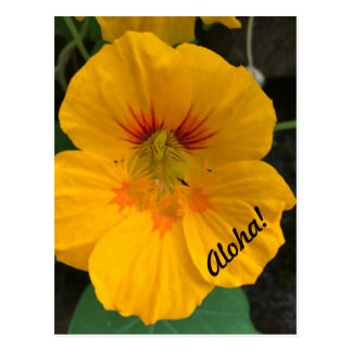 Hawaiian Yellow Flower Postcard - Aloha!