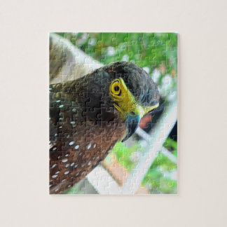 Hawk Bird Jigsaw Puzzle