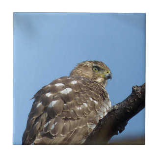 hawk ceramic tile