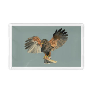 Hawk Flapping Wings Watercolor Painting Acrylic Tray