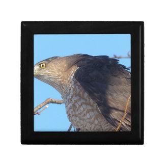 hawk gift box