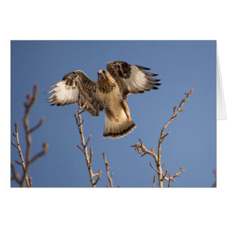 Hawk hunting for mice card