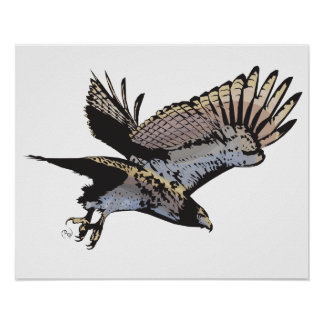 Hawk Illustration Poster