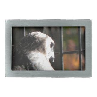 Hawk in a bird sanctuary belt buckles