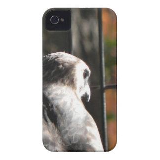 Hawk in a bird sanctuary iPhone 4 cover