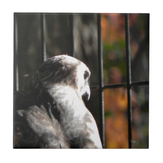 Hawk in a bird sanctuary tile
