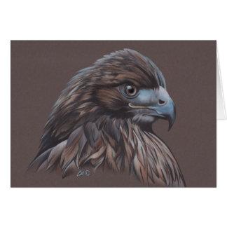 Hawk in Colored Pencil Card