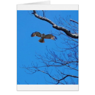 Hawk in flight card