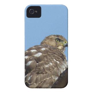 hawk iPhone 4 cases