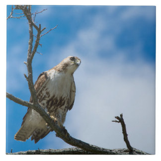 Hawk On The Hunt Large 6 x 6  Ceramic Photo Tile