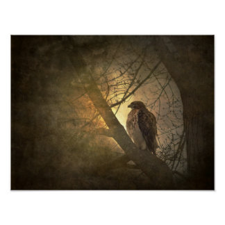 hawk on tree branch poster